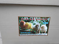 Брудер для птенцов O-mega