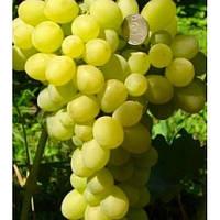 Виноград Єрмак