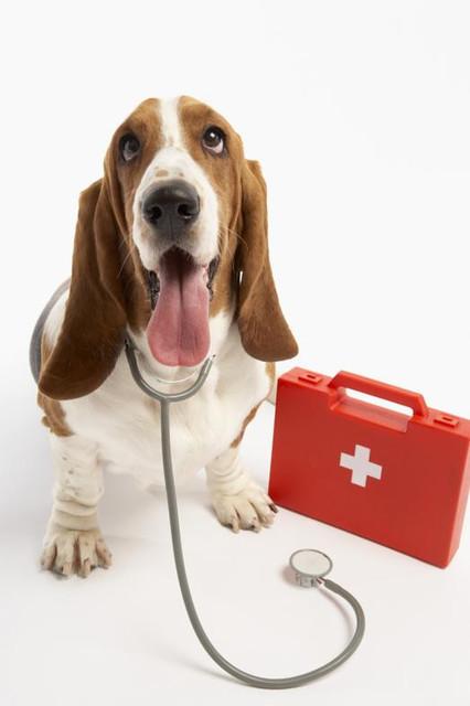 Аптечка первой помощи, ветпрепараты