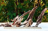 Корень коралловый №108 для аквариума (набор), фото 2