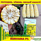 Семена, кукуруза сахарная двухцветная (биколор) Нирвана F1 (Нидерланды), 1000 семян, ТМ Hazera Seeds, фото 2