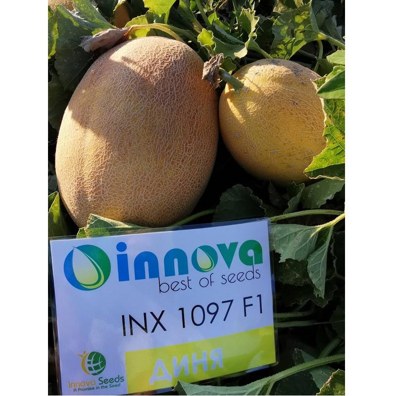 Насіння дині INX 1097 F1 (1000 нас.) Innova Seeds