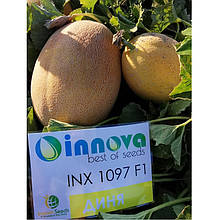 Семена дыни INX 1097 F1 (1000 сем.) Innova Seeds