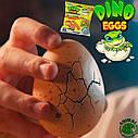 Растущая игрушка в яйце «Dino Eggs» -Динозавры (12 шт., в дисплее)  #sbabam, фото 6