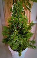 Сосна из веток (экибан  елечный, елка из веток)