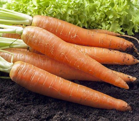 Семена моркови Каротан, 1 г —  поздняя (150 дней), тип флаке, Rijk Zwaan, фото 2