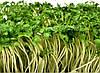 Пакеты под микрозелень  пп 260х270 (с дном под лоток), фото 4
