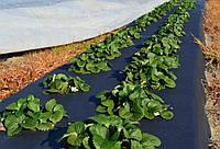 Як використовувати агроволокно для вирощування полуниці