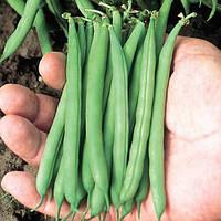 Патіон насіння квасолі спаржевої (Syngenta)