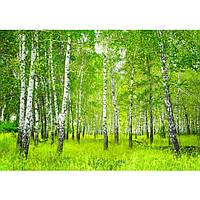 Фотообои флизелиновые 3D природа 300x210 см Березовый лес (0112-300-210)