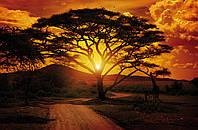 Фотообои 368x254 см Закат в Африке (055P8)