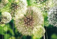 Фотообои 3D цветы 254x184 см Много одуванчиков (056P4)