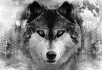 Фотообои 368x254 см Могучий волк (10147P8)