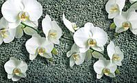 Фотообои 3D цветы 368*254 см Ветка орхидеи (1016P8)