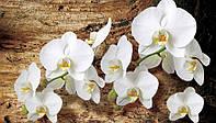 Фотообои 3D цветы 368x254 см Яркие, белые орхидеи (1017P8)