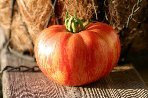 Семена томат Марочное вино (Винтейдж Вайн)