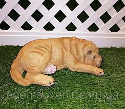Садовая фигура собака Шарпей спящий, фото 3