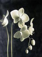 Алмазная мозаика Цвет орхидеи 40x50см DM-115 Полная зашивка. Набор алмазной вышивки