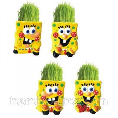 Травянчик с семенами Губка Боб