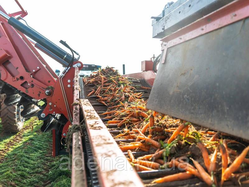 Транспортер для морковоуборочного комбайна DeWulf