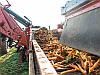 Транспортер для морковоуборочного комбайна Sator, фото 4