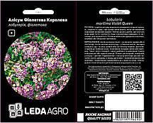 ТМ LEDAAGRO Алиссум Фиолетовая королева 0,2г