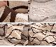 Чехол на диван HomyTex универсальный эластичный 3-х местный, Волна бежевая, фото 4