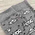 Носки мужские махровые высокие GRAND 27-29р коровы серые, фото 4
