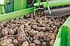 Транспортер для картофелеуборочного комбайна AVR, фото 2