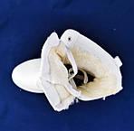.Зимние Ботинки Полусапожки Женские Белые на Меху Молния - Шнуровка (размеры: 39)ВидеоОбзор - 18, фото 5