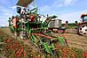 Транспортер для томатоуборочного комбайна Guaresi, фото 3