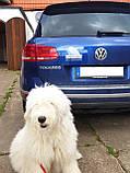 Наклейка на машину/авто Немецкий дог на борту (с некупированными ушами) (Great Dane on Board), фото 5