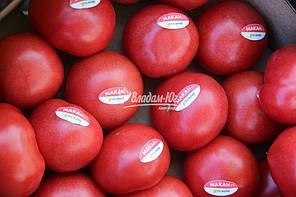 Макан F1 / Macan F1 семена томата, 250 семян — полу детерминантный, крупноплодный, розовый, ранний Clause, фото 2