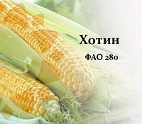 Семена кукурузы Хотын