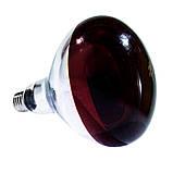 Лампа инфракрасная R125 175 Вт красн. BS, фото 3