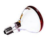 Лампа инфракрасная BR38 100 Вт красн. окраш. LO, фото 3