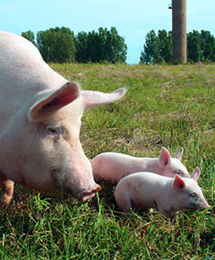 Альтернативные подходы к кормлению скота