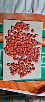 Насіння кукурудзи Хотин ФАО 250
