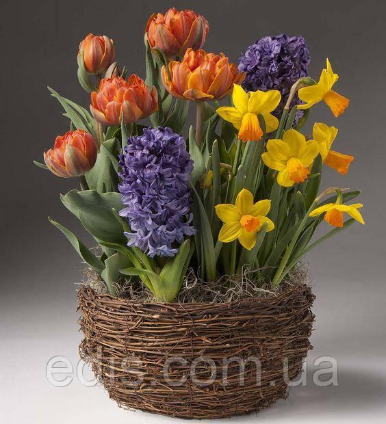 Набор луковиц цветов Токио 9 луковиц (тюльпаны, гиацинты, нарциссы)
