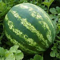 Семена Арбуза Стетсон F1 (1000 шт)