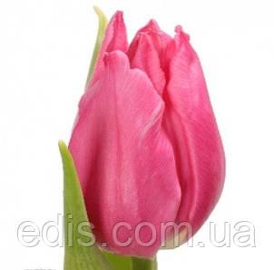Набор луковиц цветов Розовый город 11 луковиц (тюльпаны, гиацинты, пролеска), фото 2