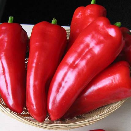 Семена перца Самандер F1, 8 семян — ранний(55-65 дн), конической формы, красный, сладкий, Nunhems, фото 2