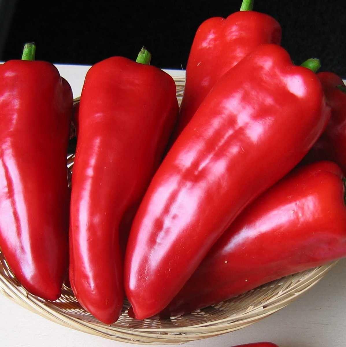 Семена перца Самандер F1, 10 семян — ранний(55-65 дн), конической формы, красный, сладкий, Nunhems
