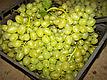 Саженцы винограда Аркадия, фото 3
