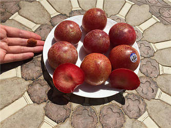 Колоновидный слива-абрикос ШЕДЕВР