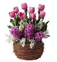 Набор луковиц цветов Розовый город 11 луковиц (тюльпаны, гиацинты, пролеска)