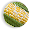 Сахарная сладкая кукуруза Мраморная F1, биколор Мнагор 100 000 семян на 1.5га