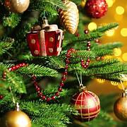 Новогодние ели и сосны