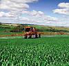 У МОЗ України готуються затвердити нові граничні норми хлорпірифосу в агропродукції