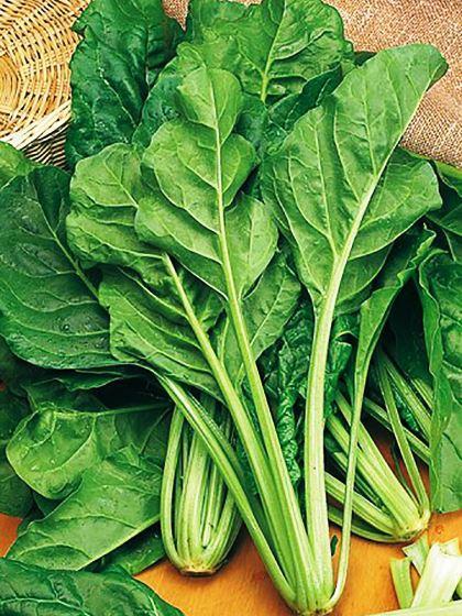 Семена свеклы листовой Мангольд зелёный